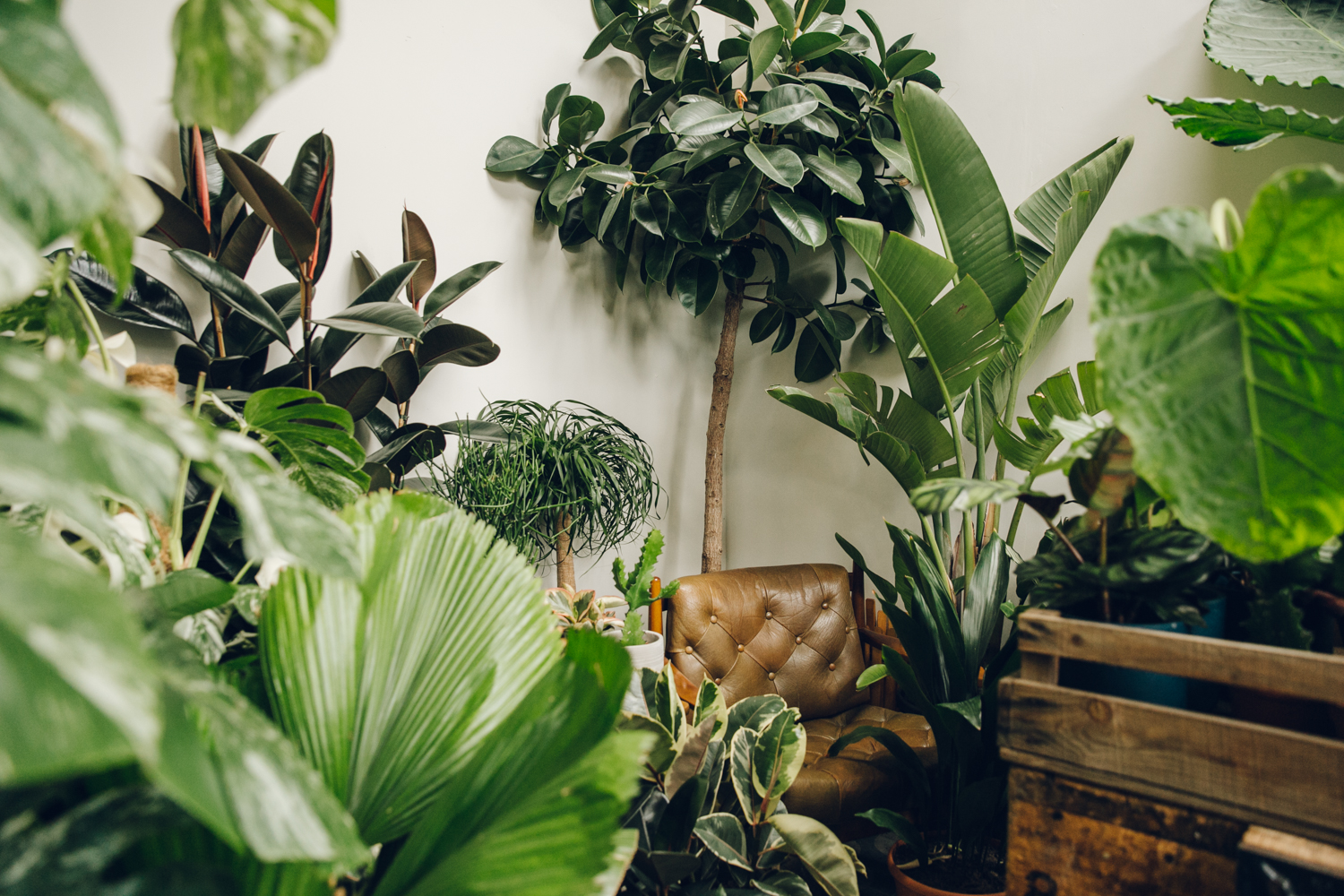 Inside the plant-filled Conservatory Archives in London.