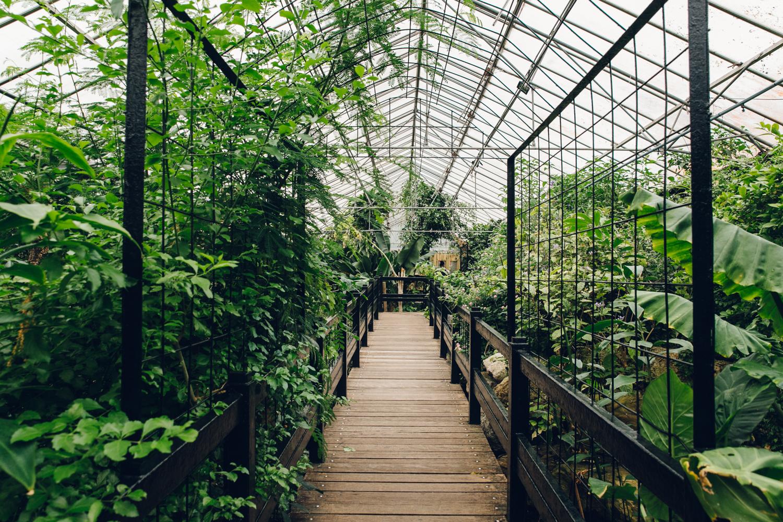 An indoor jungle in Leeds.