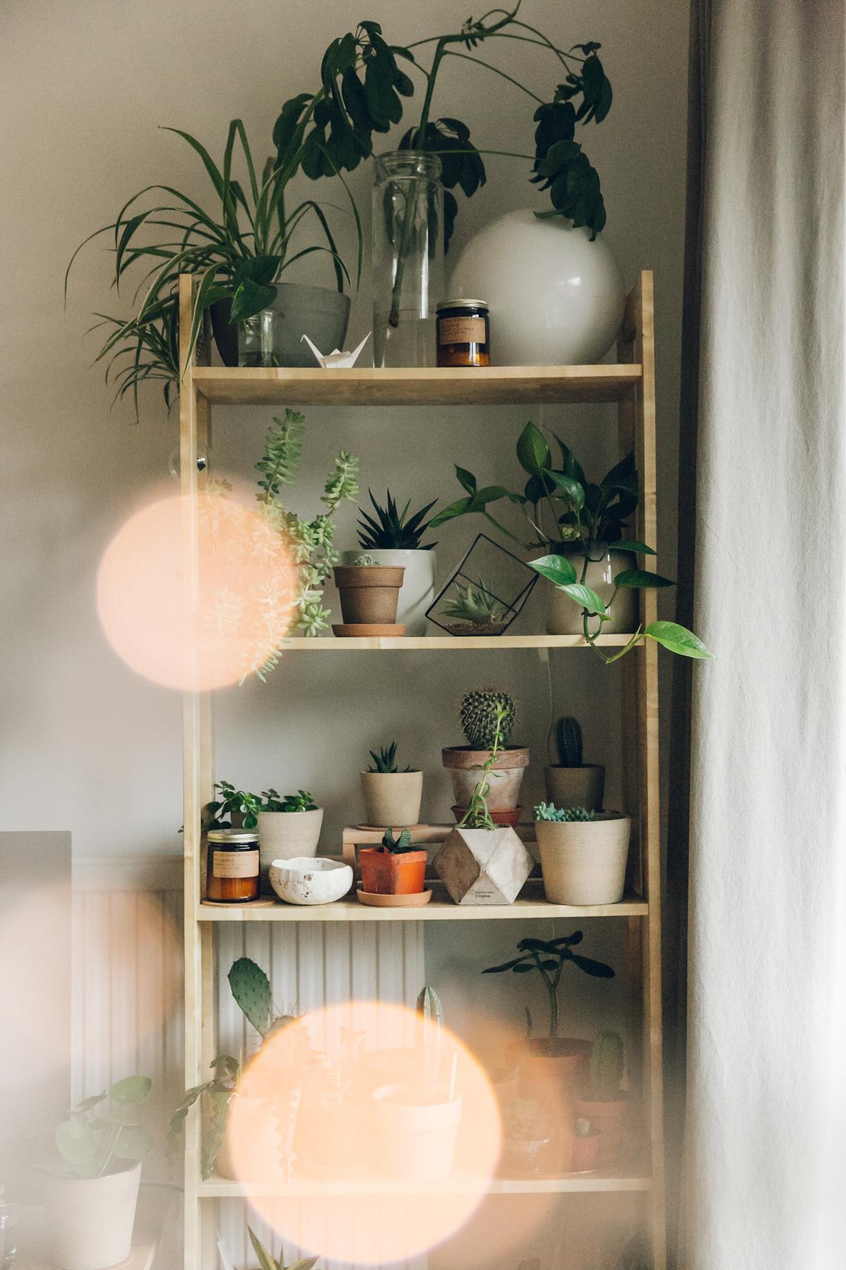Indoor plant display.