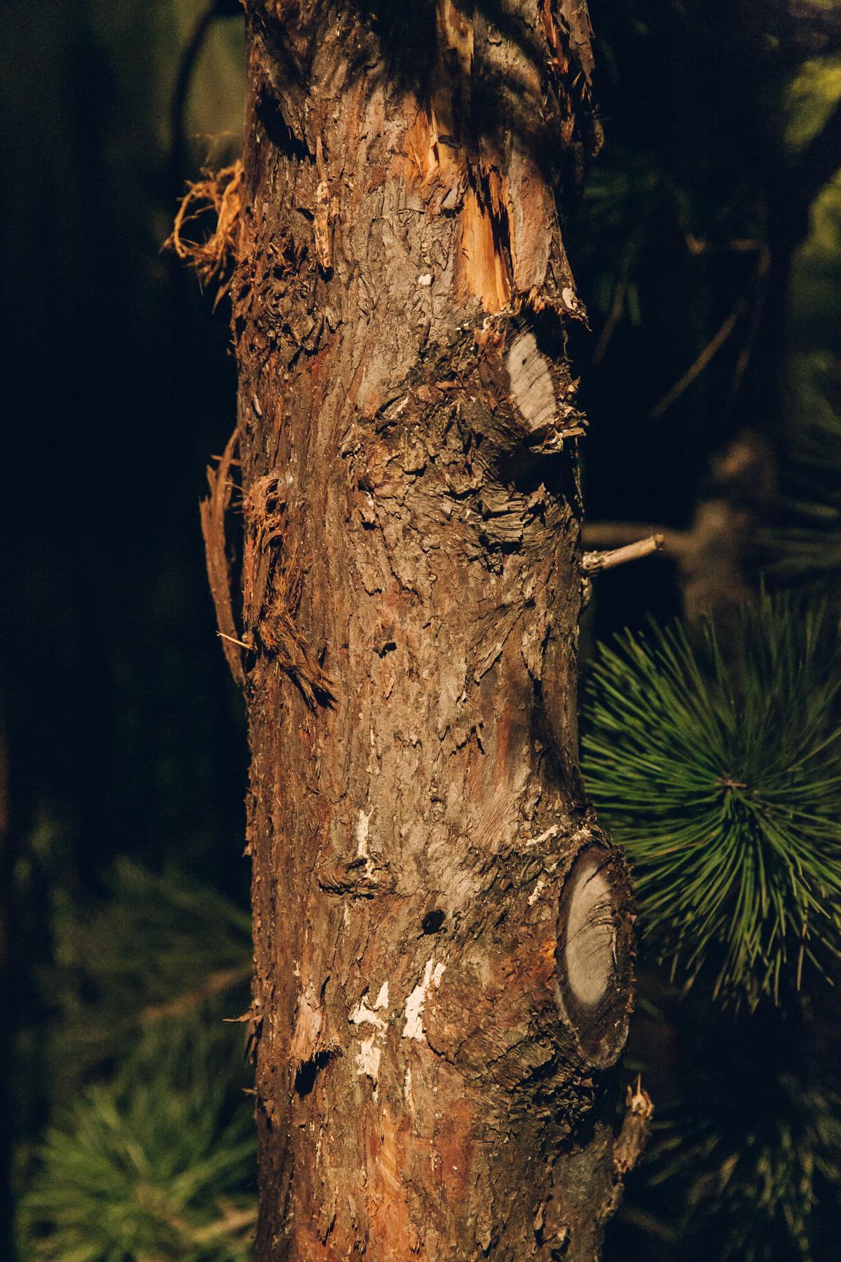 Tree textures in the dark.