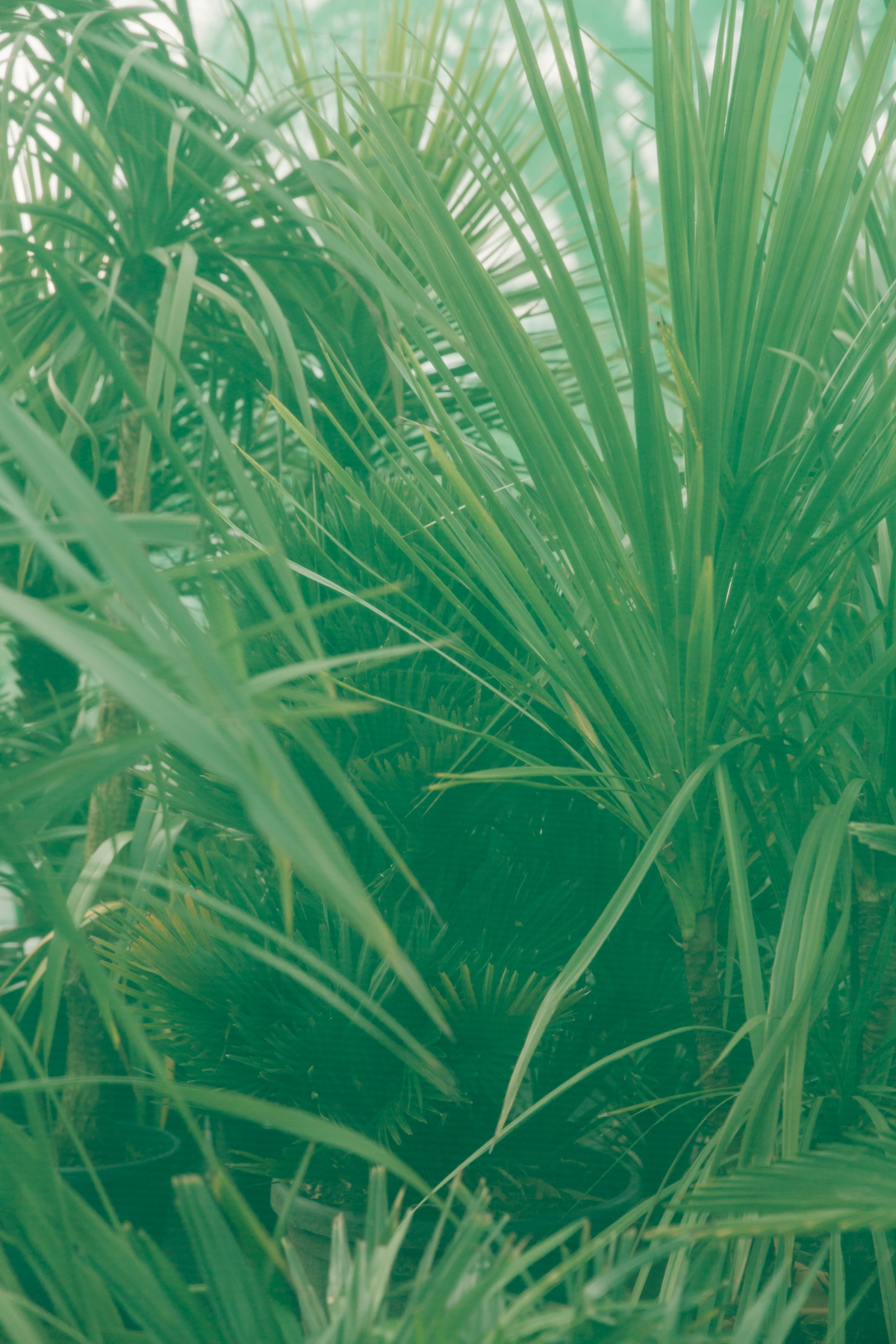 Exploring the plants at Urban Jungle near Norwich.