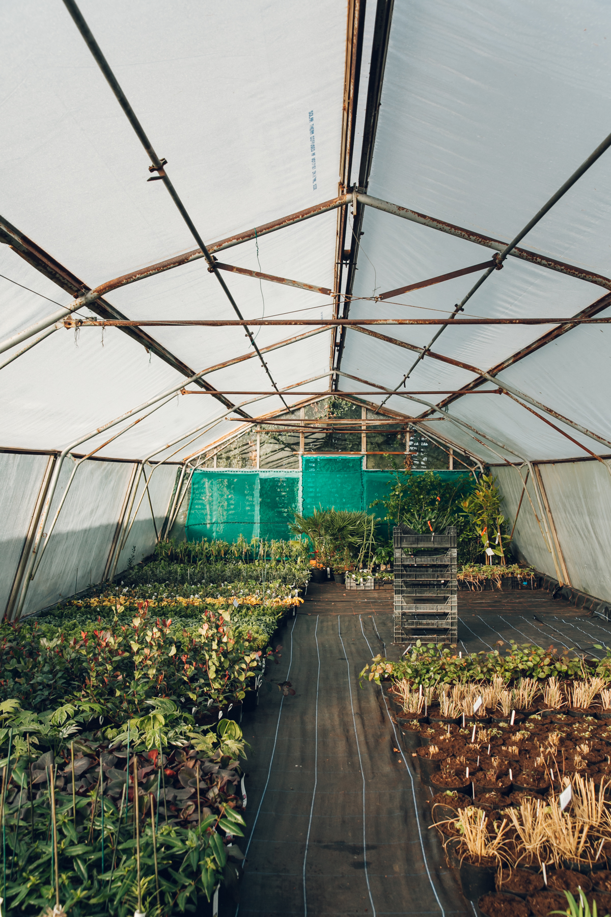 Exploring the plants in the polytunnel at Urban Jungle near Norwich.