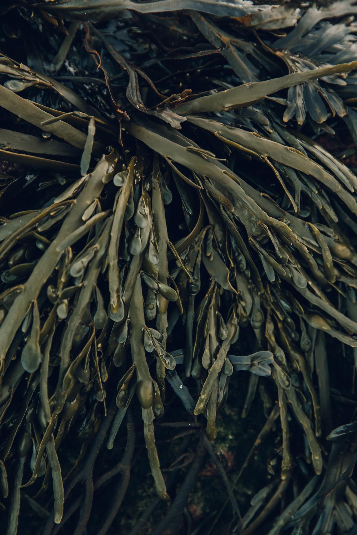 Texture in seaweed.