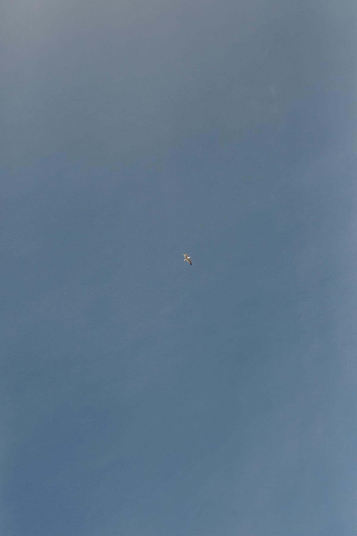Birds in the blue sky.