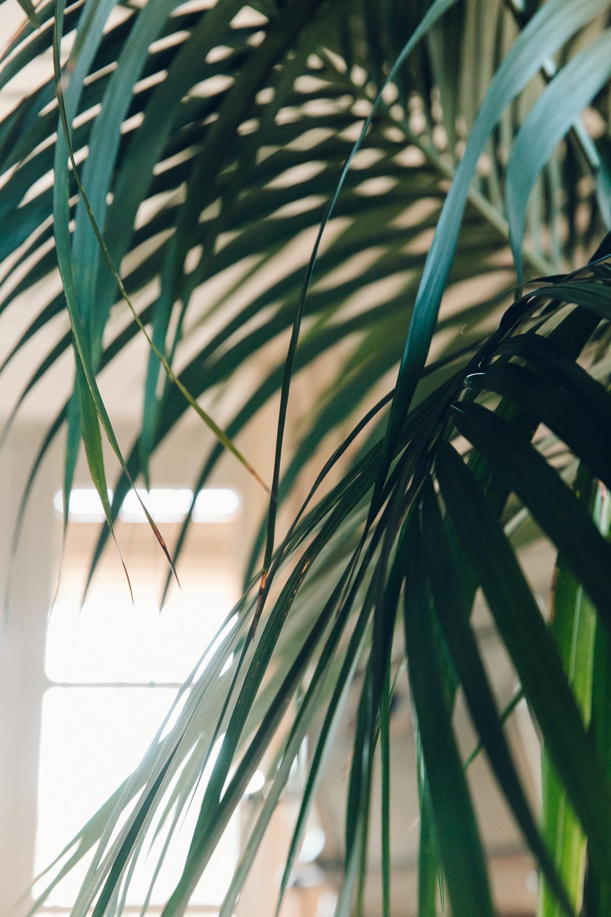 Palm tree details.