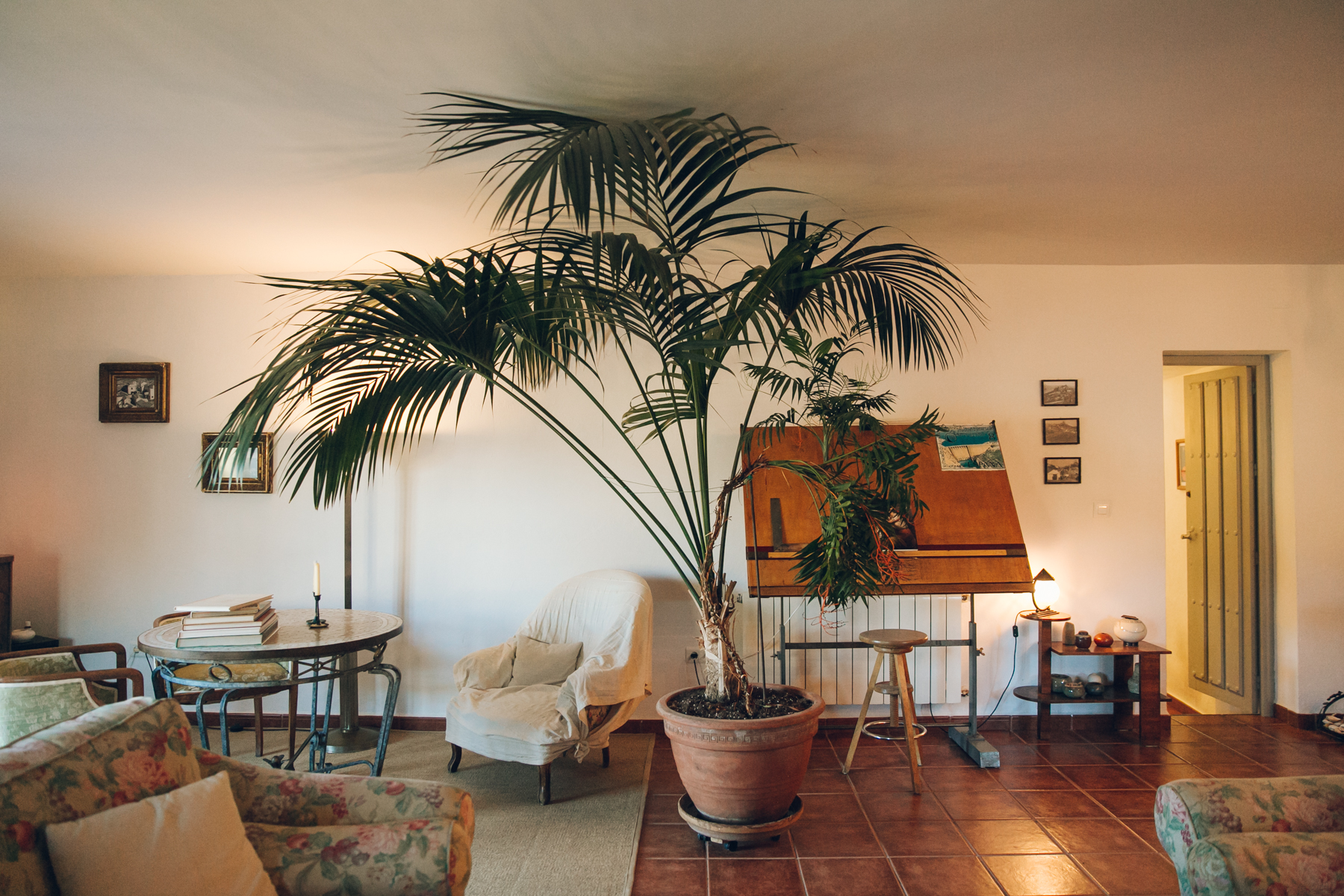 Interior details in a Spanish home with huge houseplants.