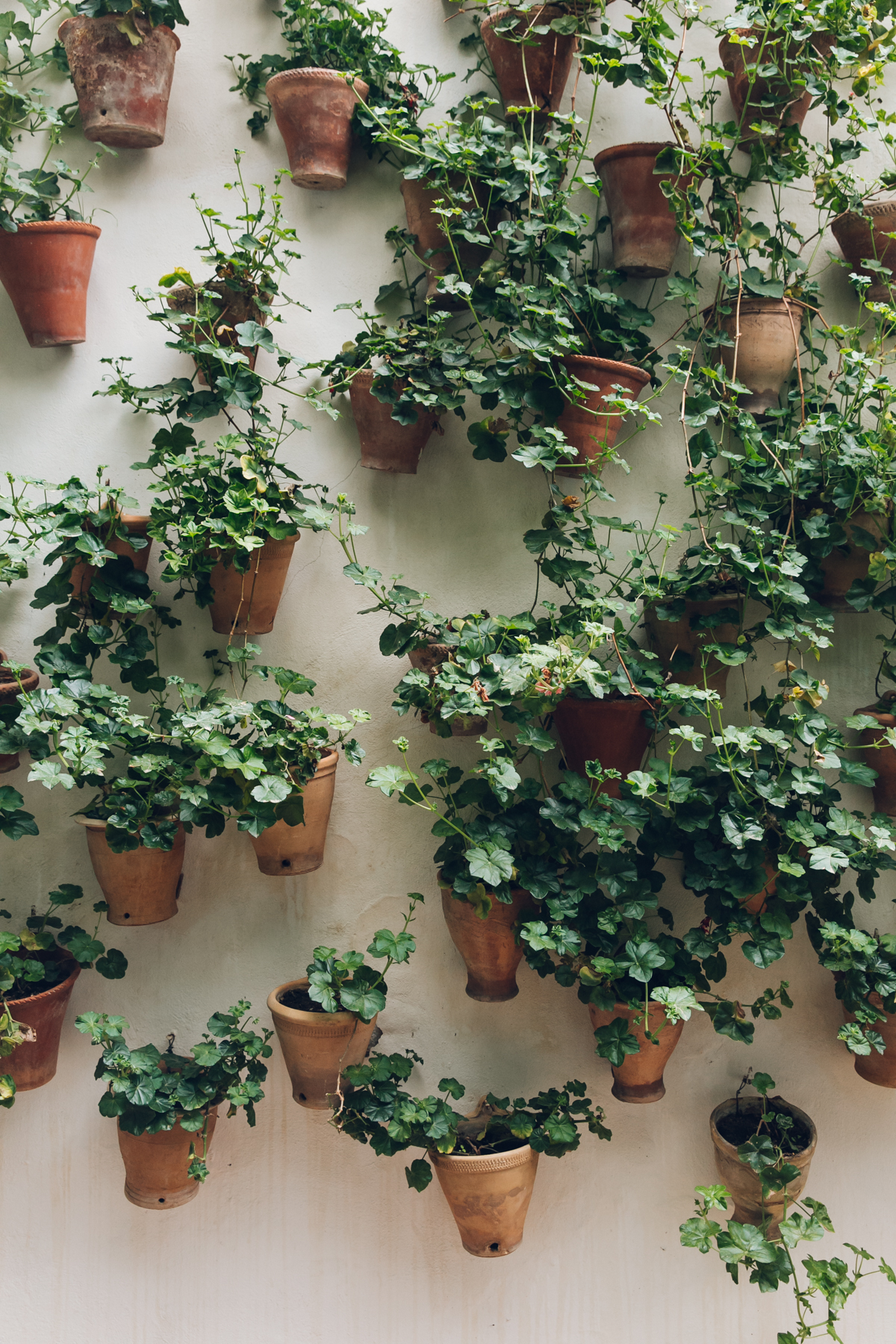 Plant display on a patio wall in Andalusia.