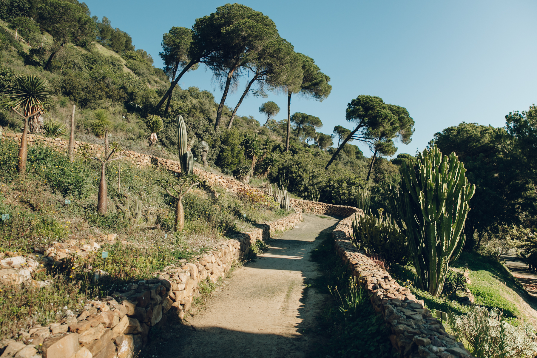 Cacti in Malaga Botanical Gardens, Spain.