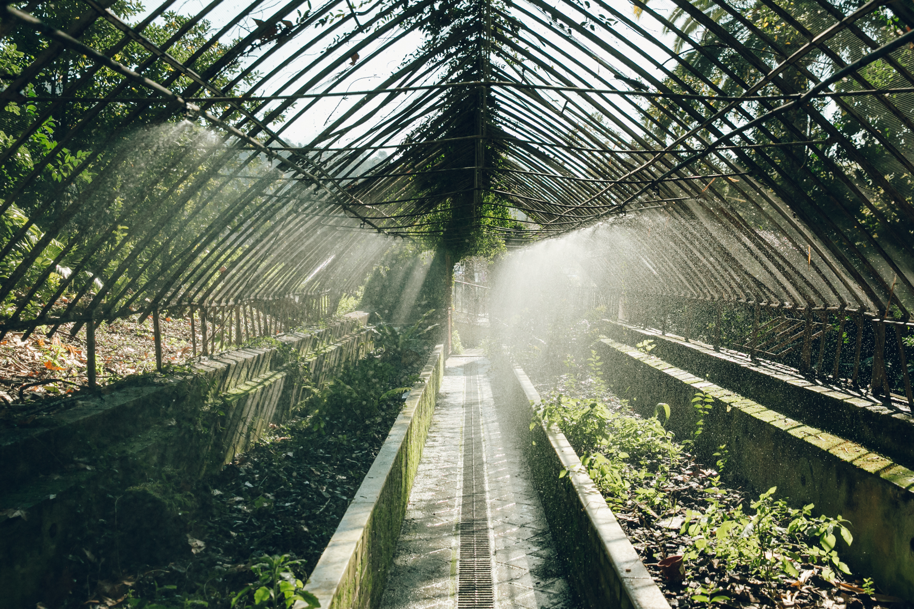 Watering time in the greenhouse in Malaga Botanical Gardens, Spain.