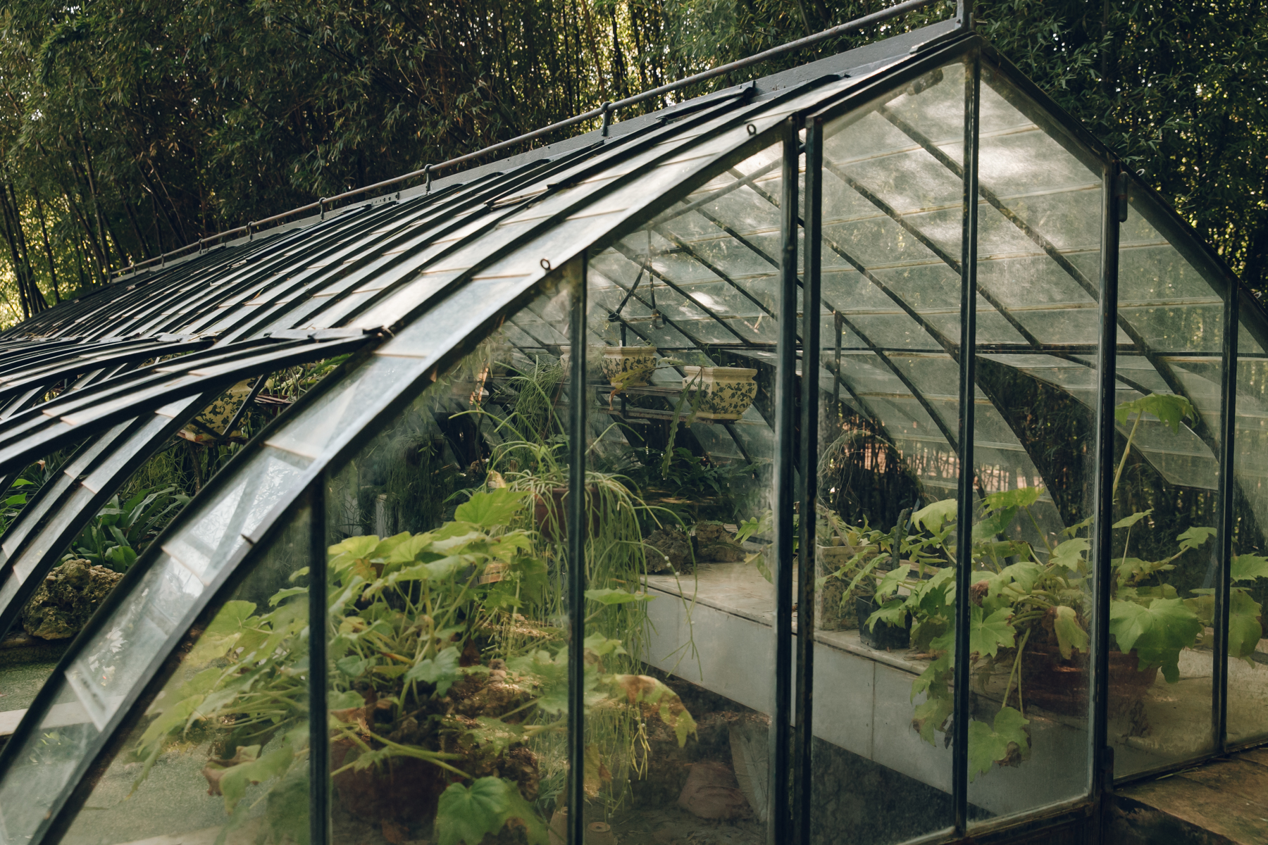 An overgrown greenhouse in Malaga botanical gardens.