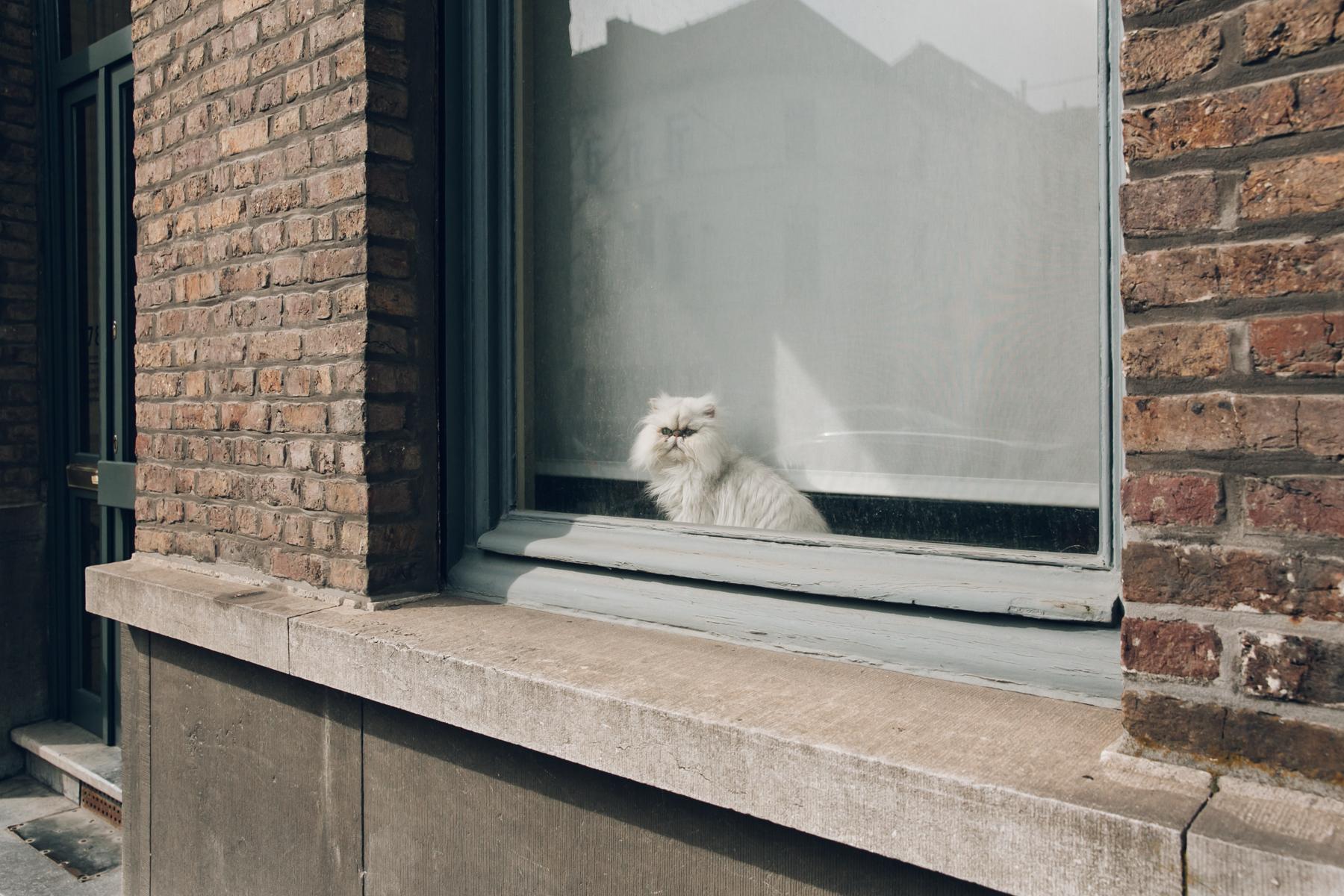 Coco the cat in a window in Gent, Belgium.