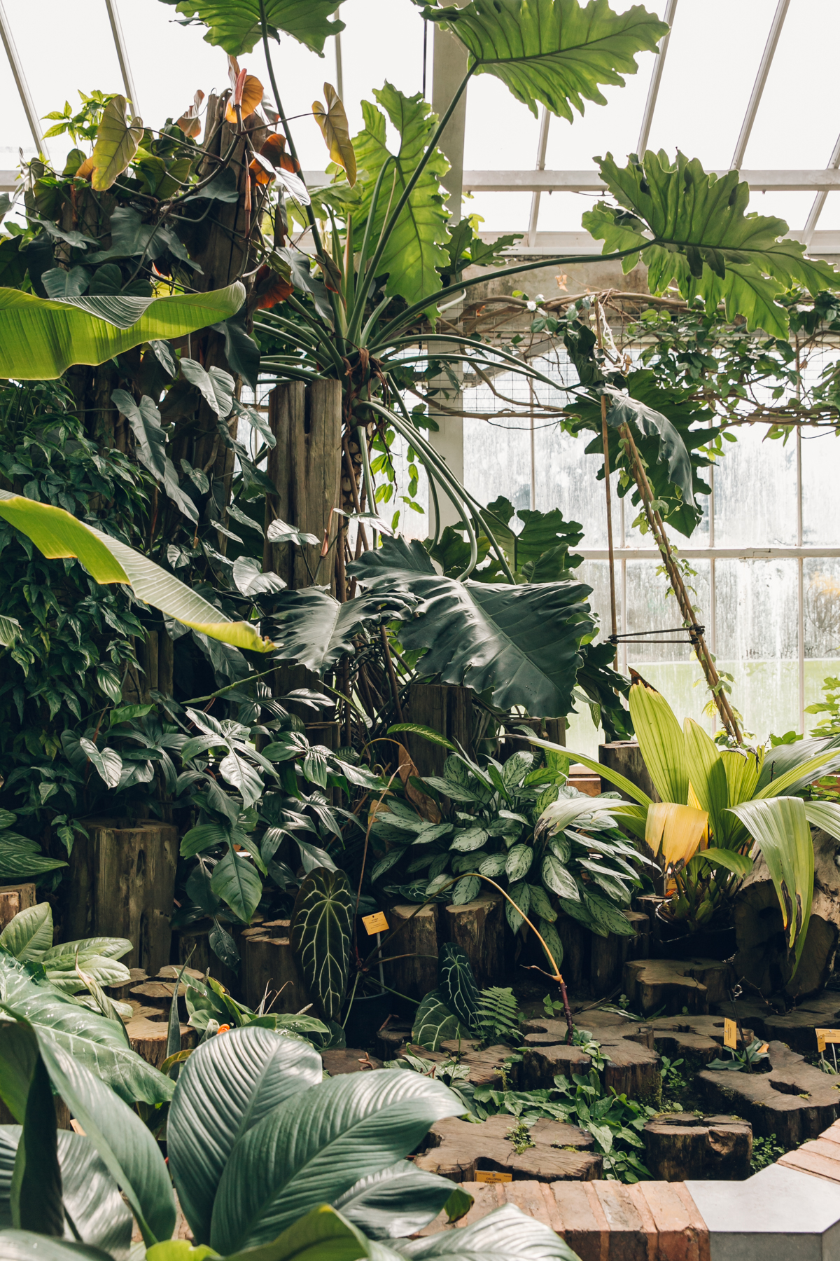 Inside the greenhouses at the Botanic Garden in Meise, Belgium.
