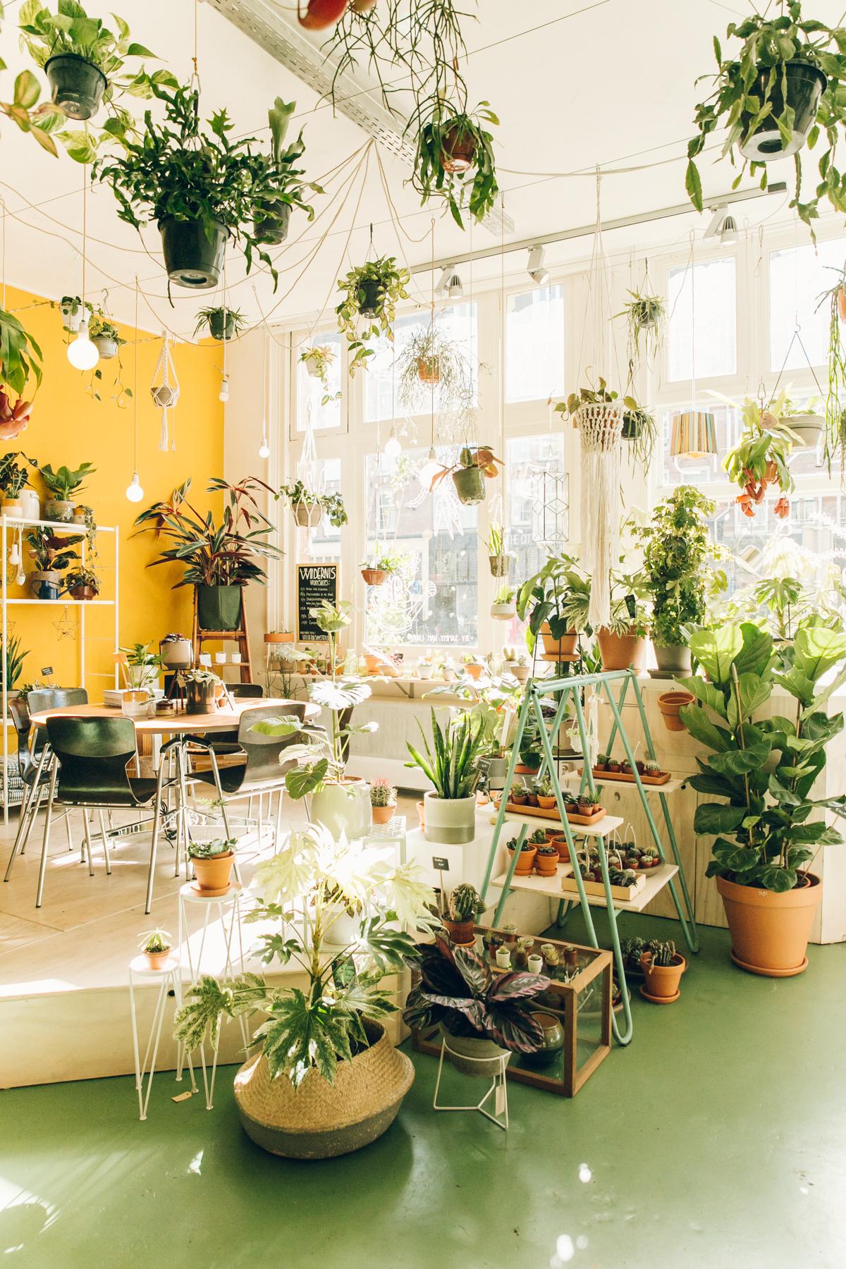 Inside Wildernis - a plant shop in Amsterdam.