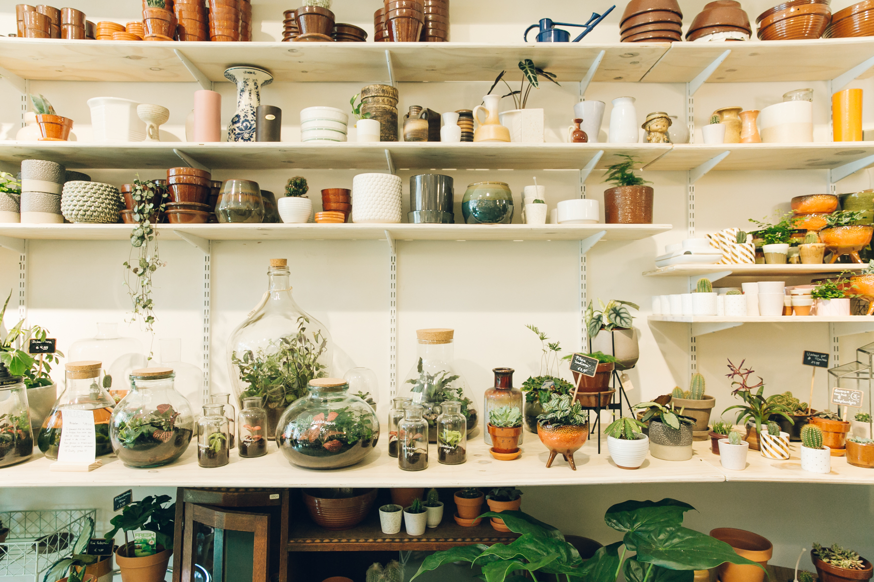 Plants and ceramics for sale in Wildernis in Amsterdam.
