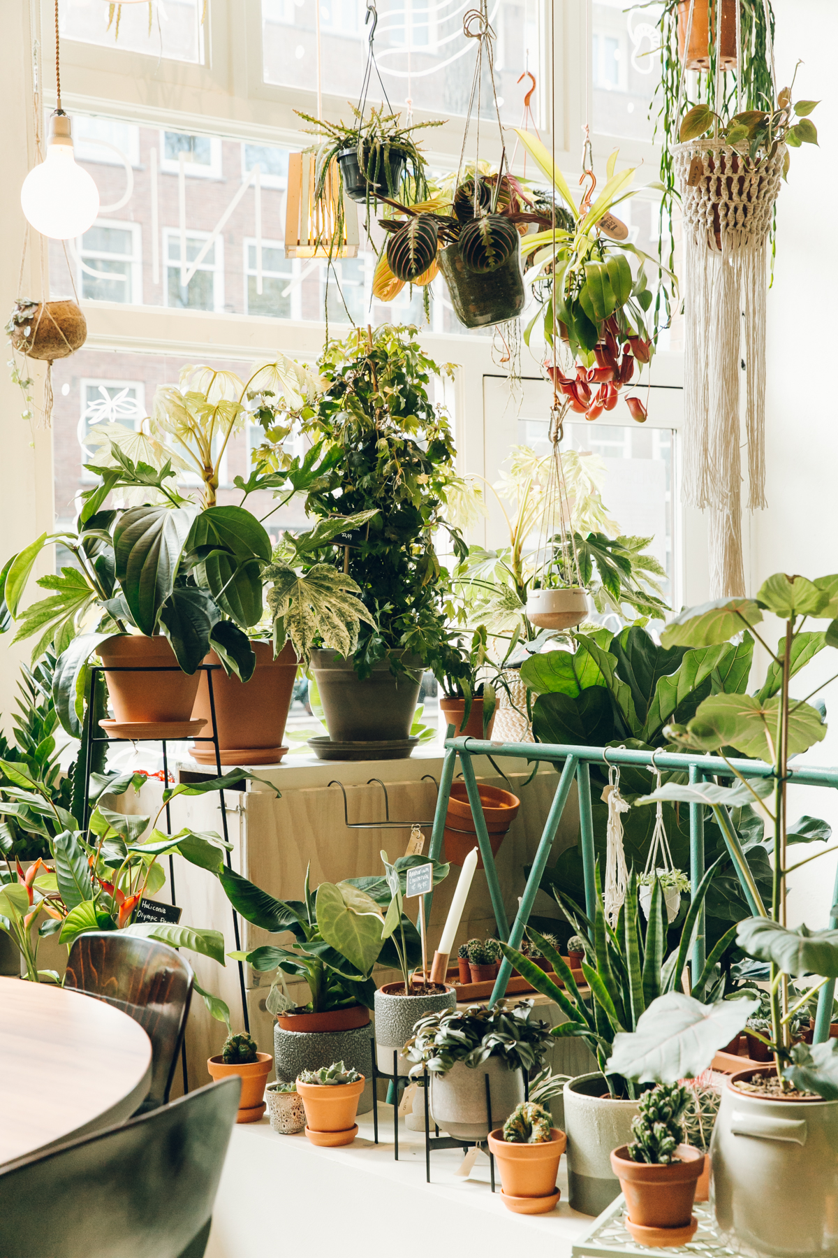 A plant shop called Wildernis in Amsterdam.
