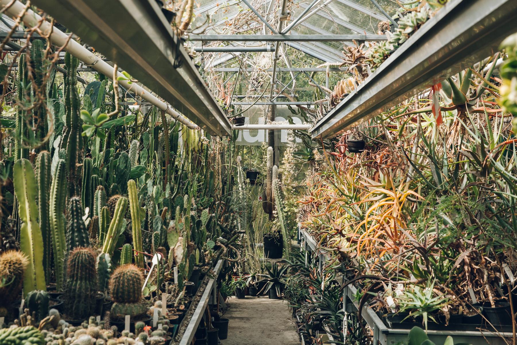 Cacti inside the glasshouses at Botanische Tuin Zuidas in Amsterdam.