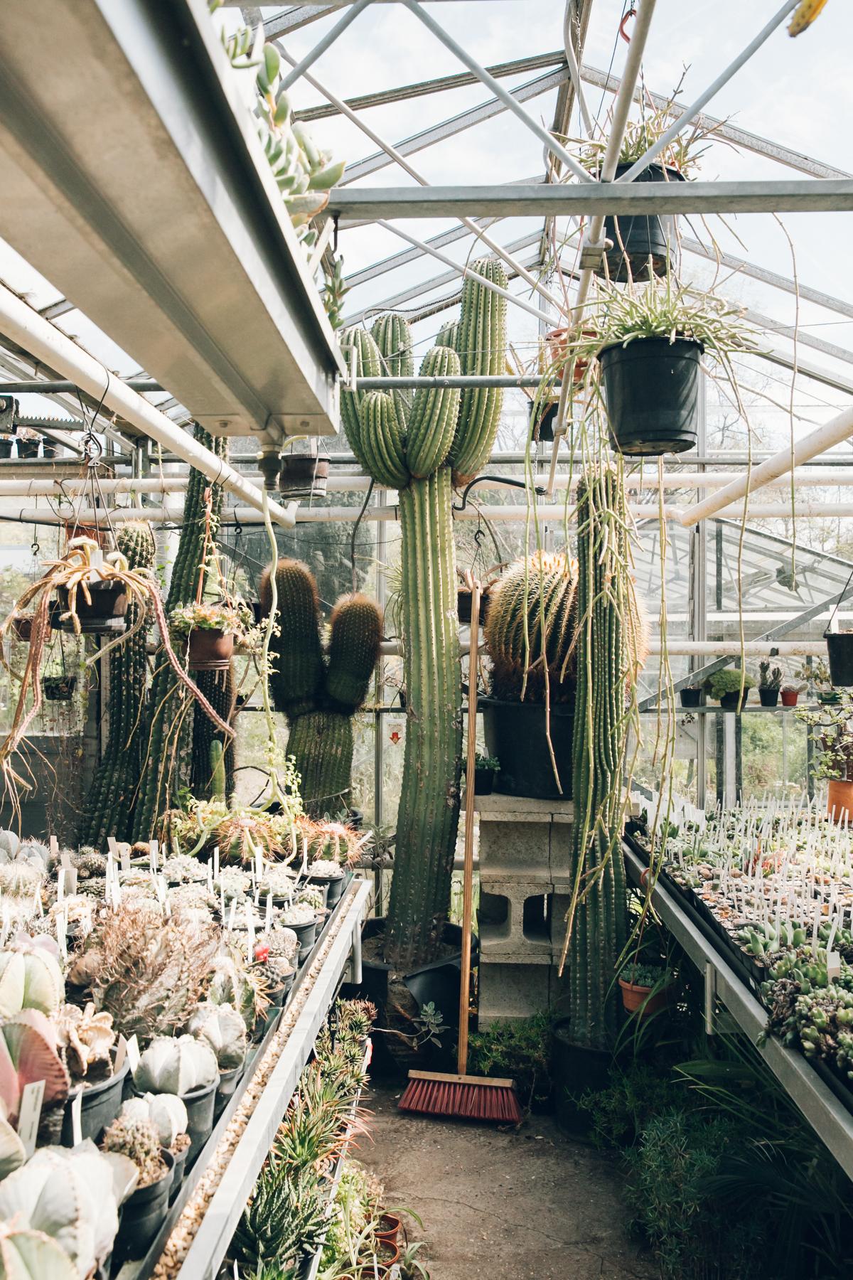 Inside the glasshouses at Botanische Tuin Zuidas in Amsterdam.