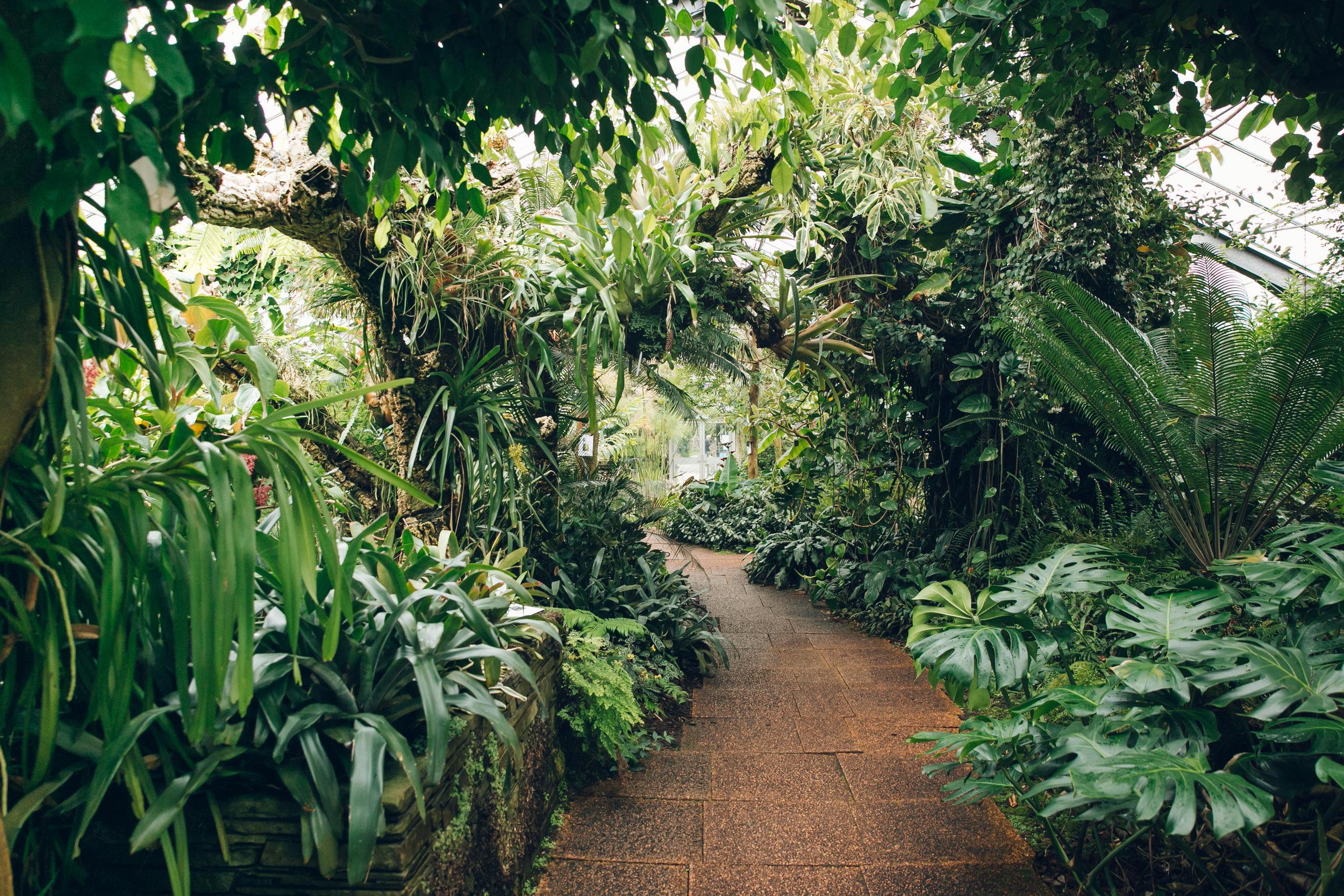 Dundee University Botanic Garden - from the Haarkon Greenhouse Tour.