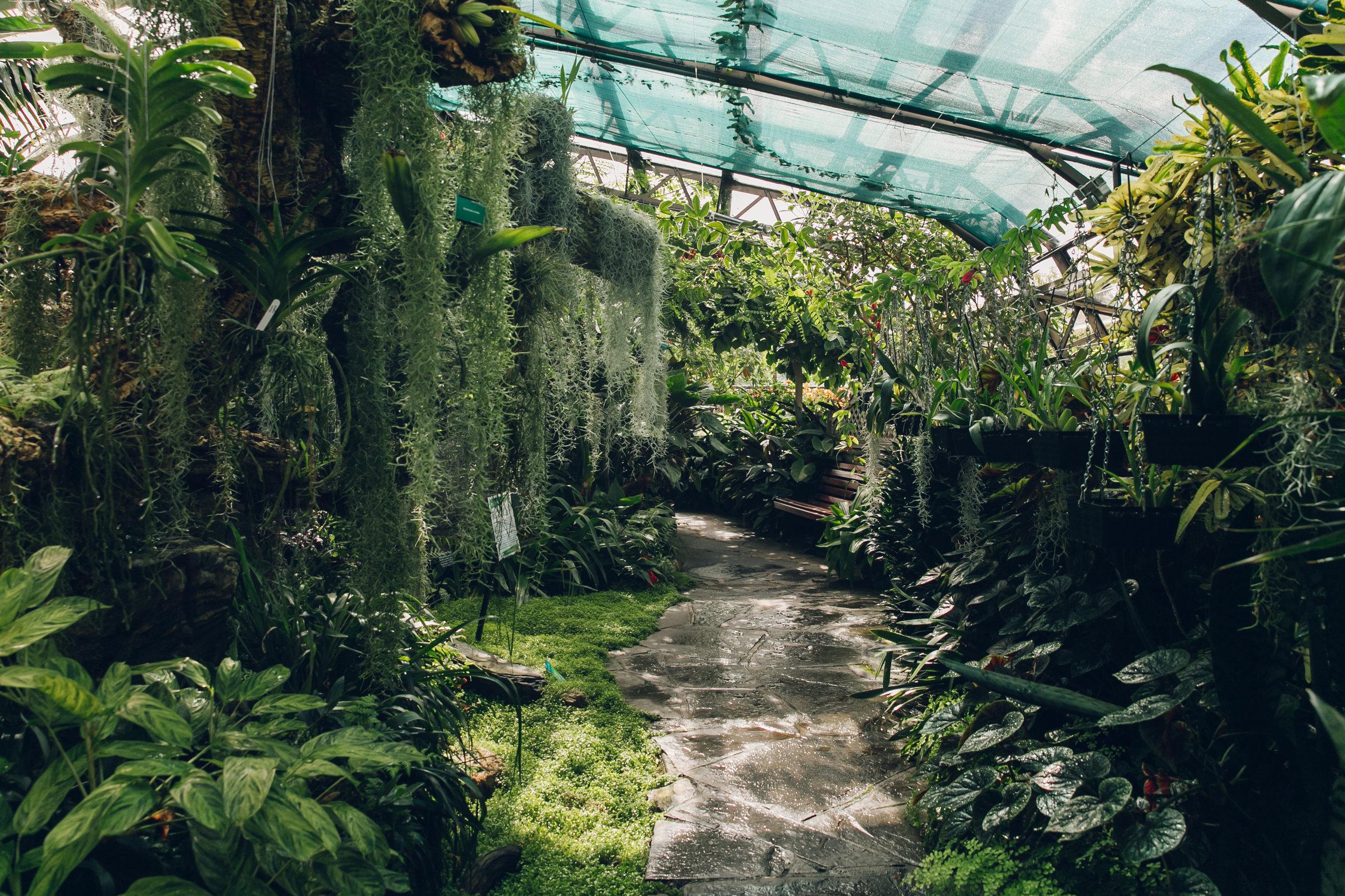 Inverness Botanic Garden - on the Haarkon Greenhouse Tour.