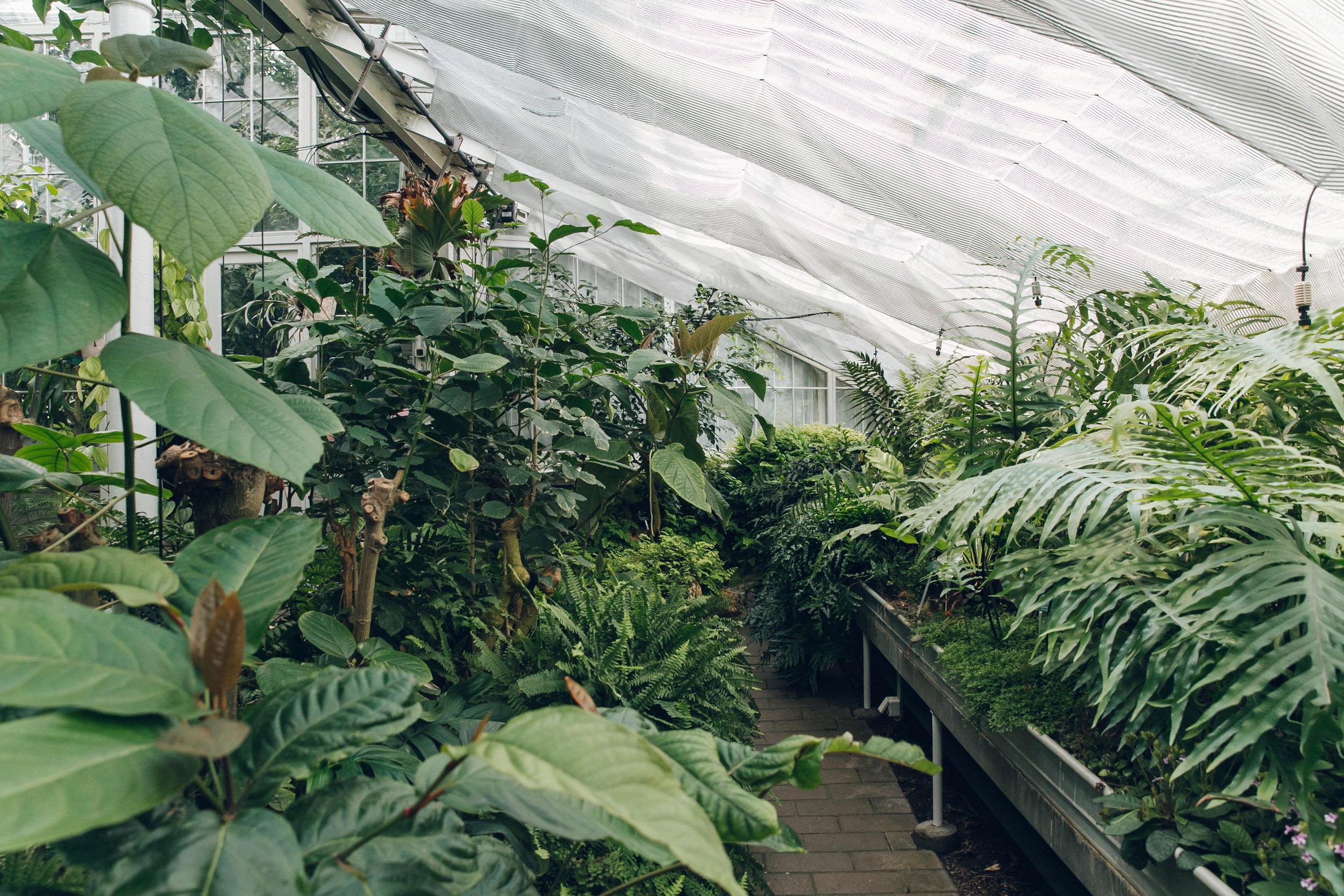 72 hours in Copenhagen - Copenhagen Botanical Gardens.