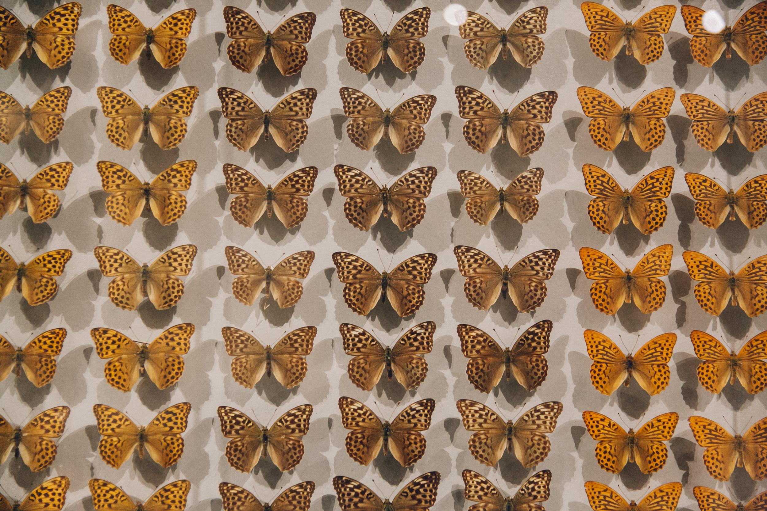 72 hours in Copenhagen - Natural History Museum.