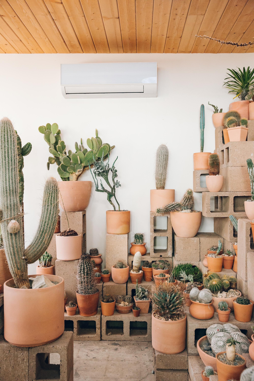 Cactus Store in Echo Park, LA - Haarkon in California.