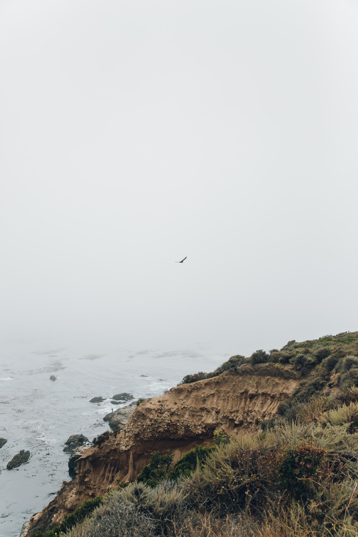 Big Sur Drive Route 1 California Bird in The Mist
