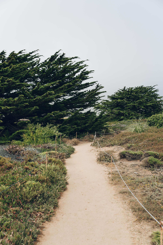 Big Sur Drive Route 1 California Beach Path