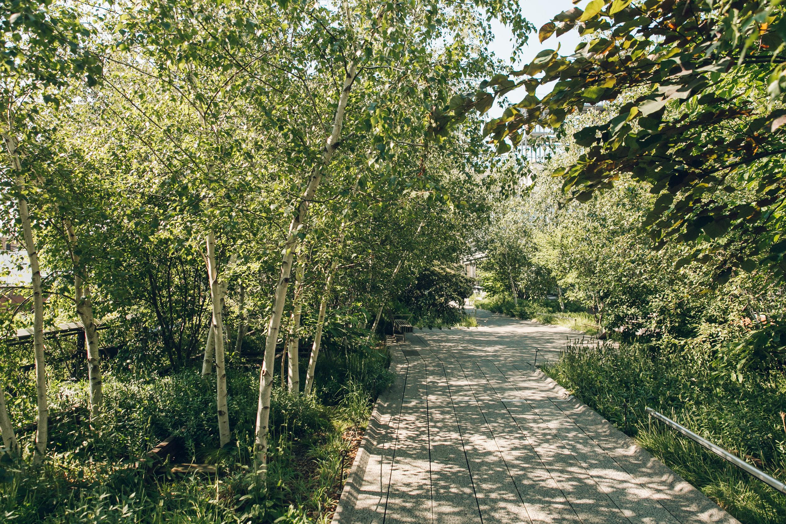 The High Line NYC Path