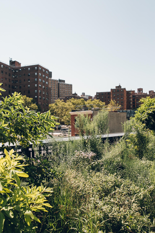 The High Line NYC Bush