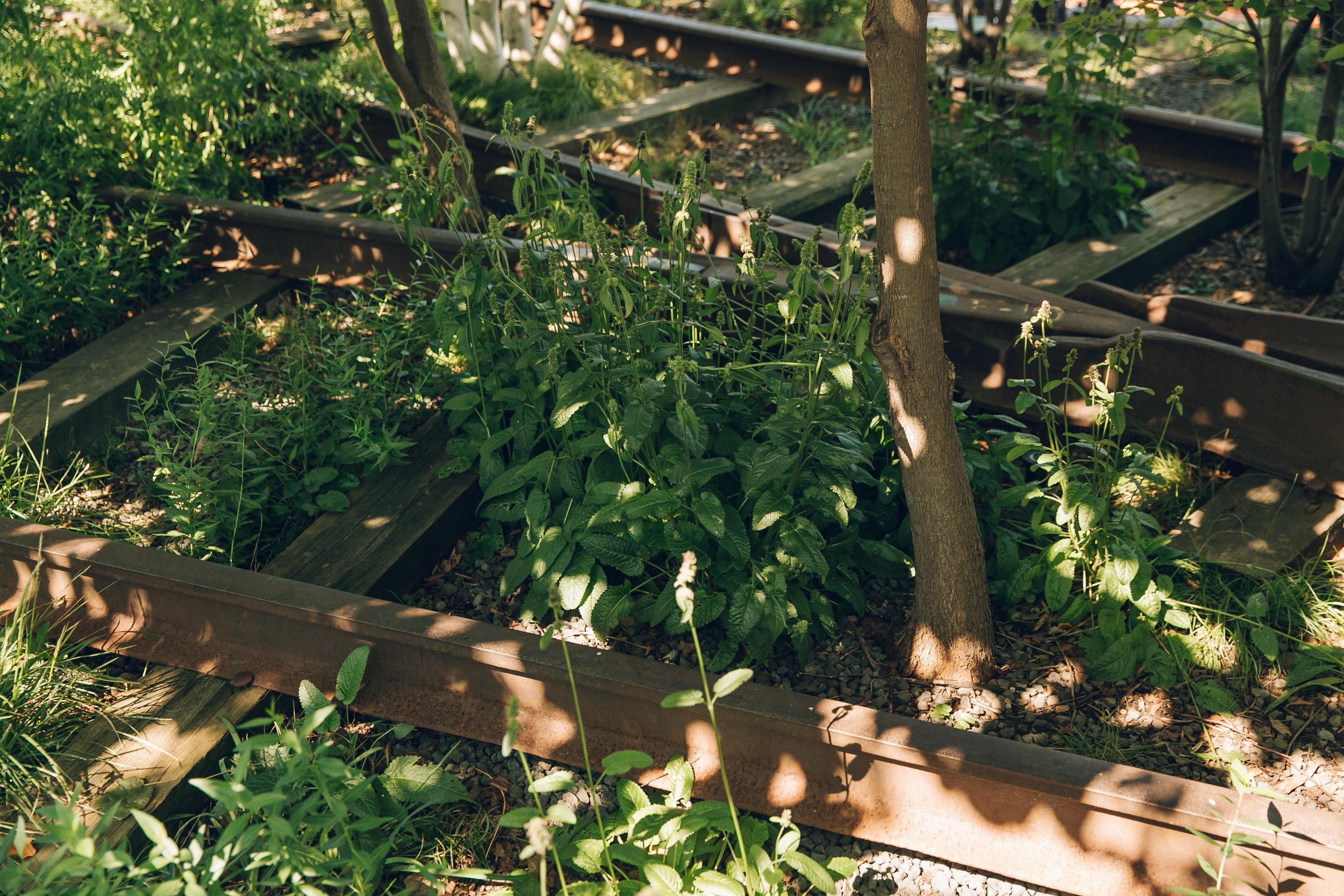 The High Line NYC Rail Tracks
