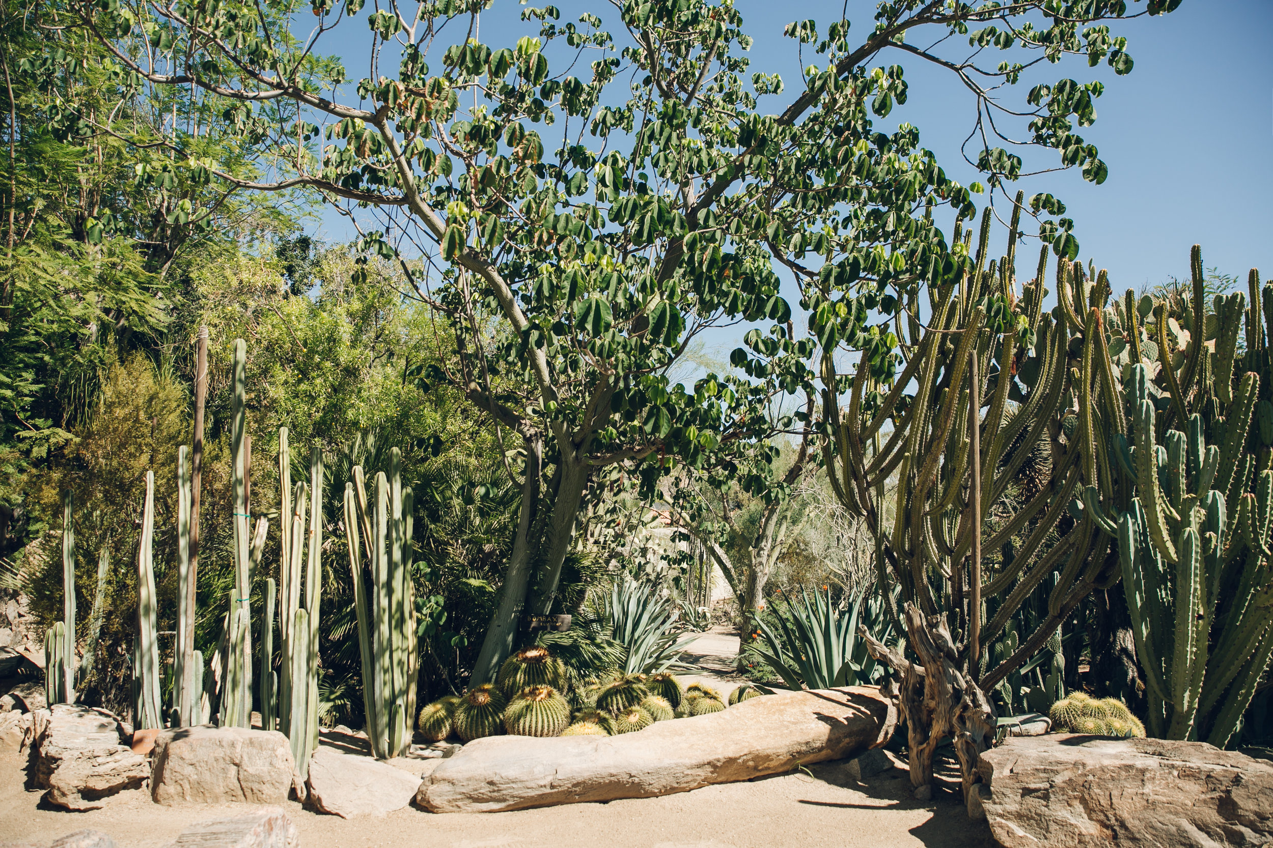 Moorten Botanical Garden in Palm Springs, California.