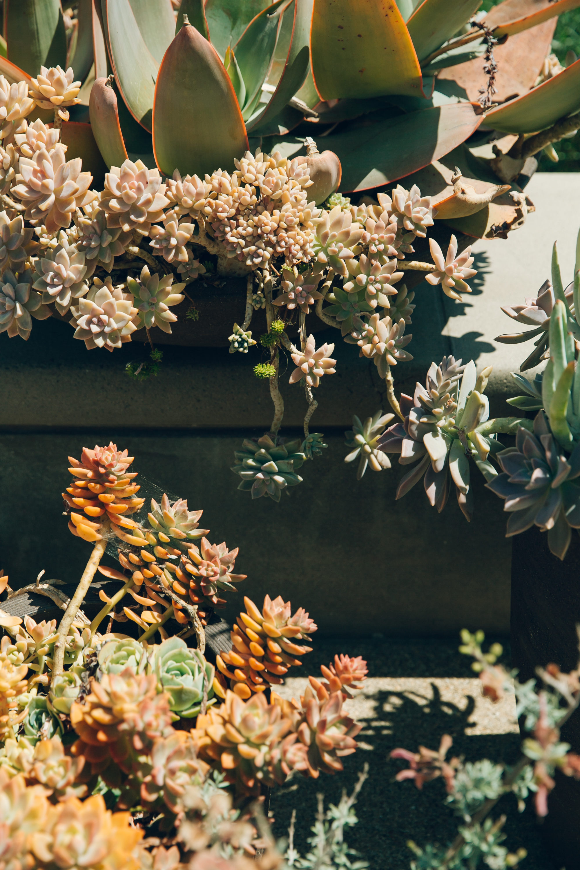 California road trip. Succulents.