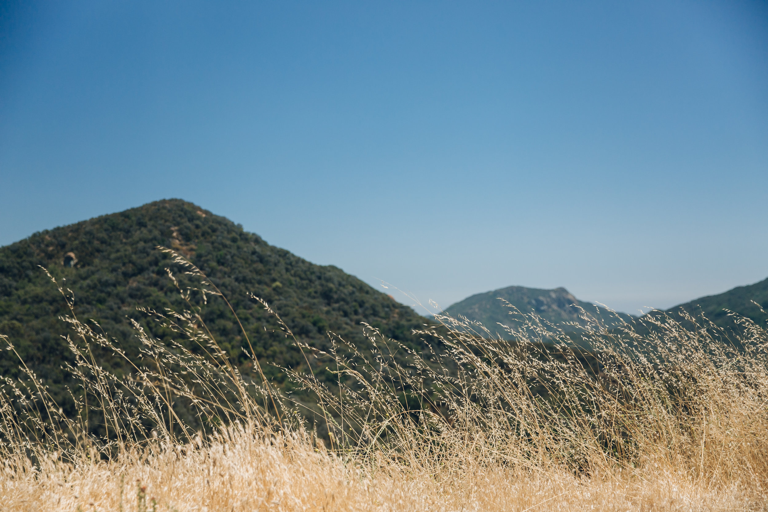 Grasses in Californian wine country - somewhere near Santa Barbara.