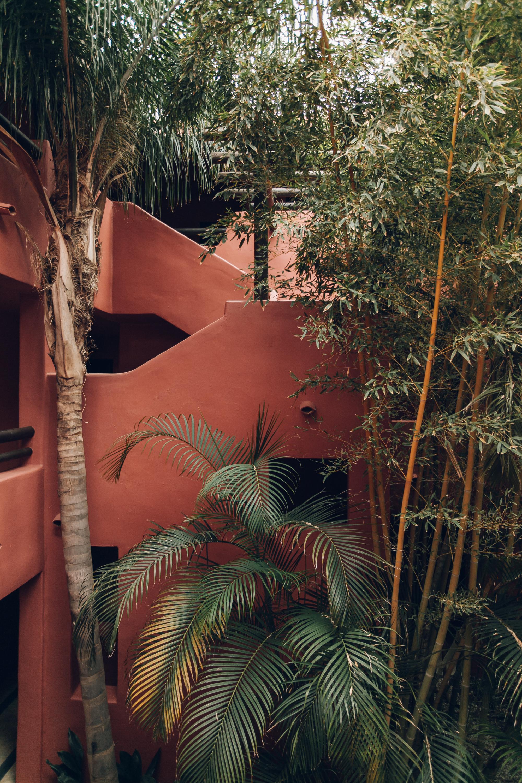 Asia Gardens Alicante Courtyard