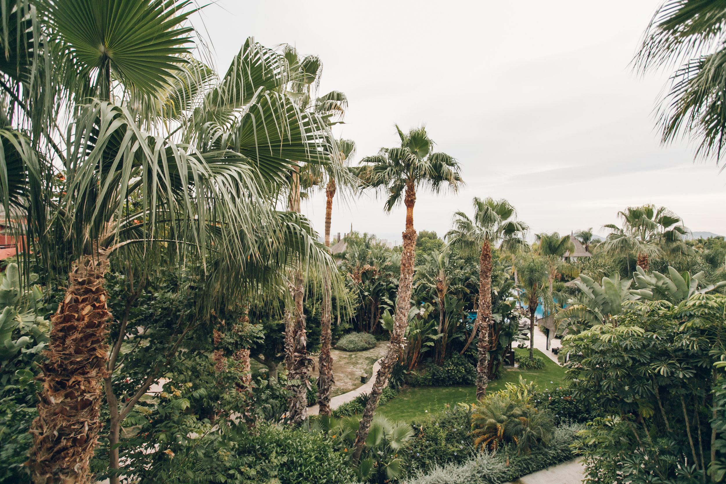 Asia Gardens Alicante Palms