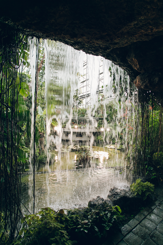 Yumenoshima Tropical Greenhouse in Tokyo.