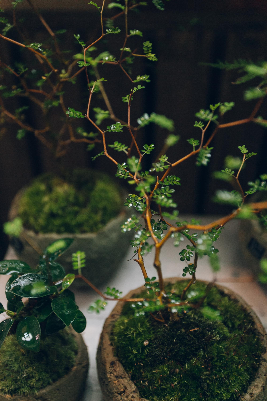 Cotoha, a plant shop in Kyoto - Haarkon in Japan.