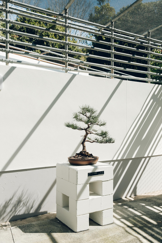 Bonsai House in Brisbane Botanic Gardens - Haarkon.