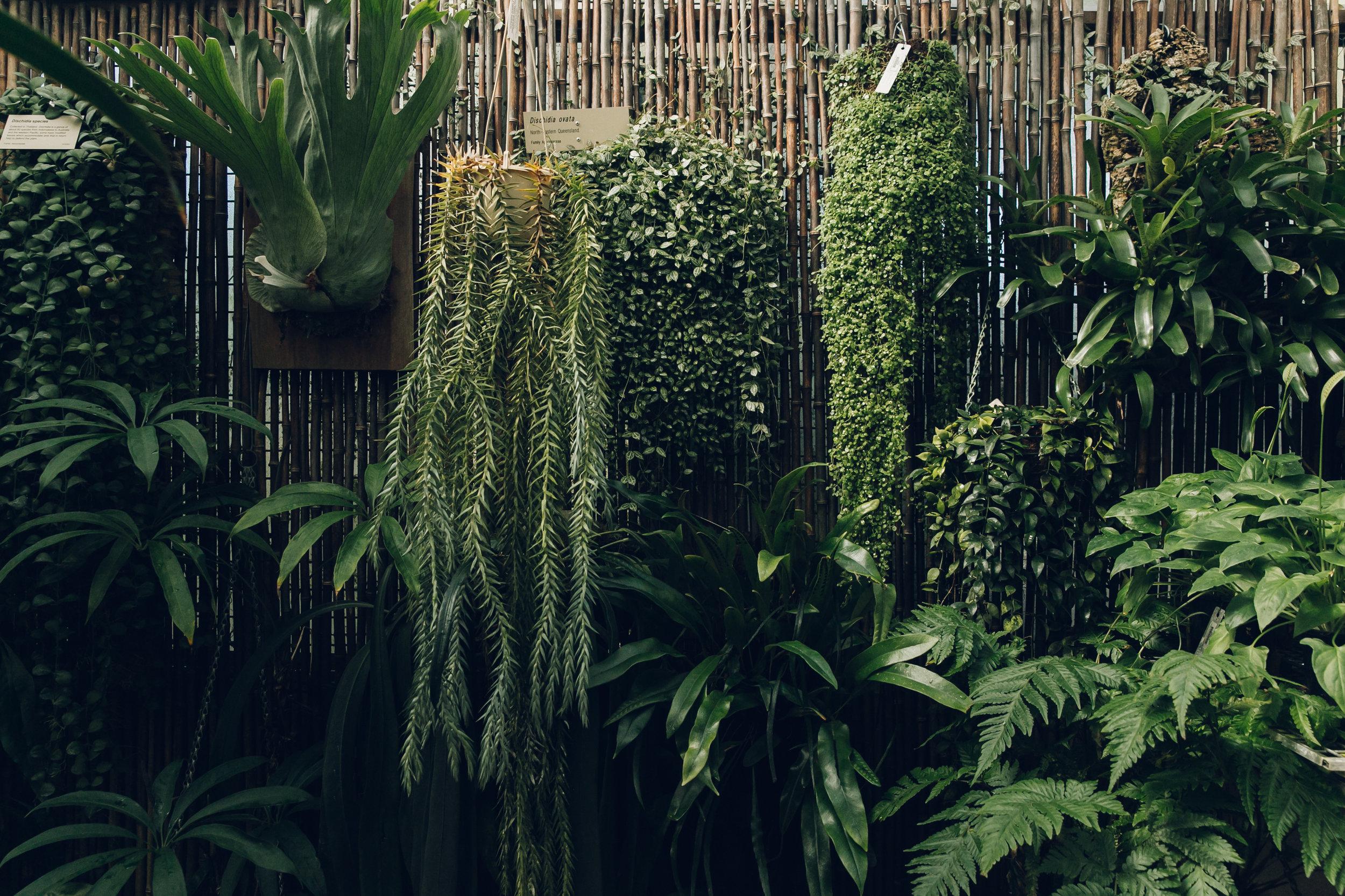 Latitude 23 Glasshouse in the Royal Botanic Gardens, Sydney (Australia) by Haarkon.