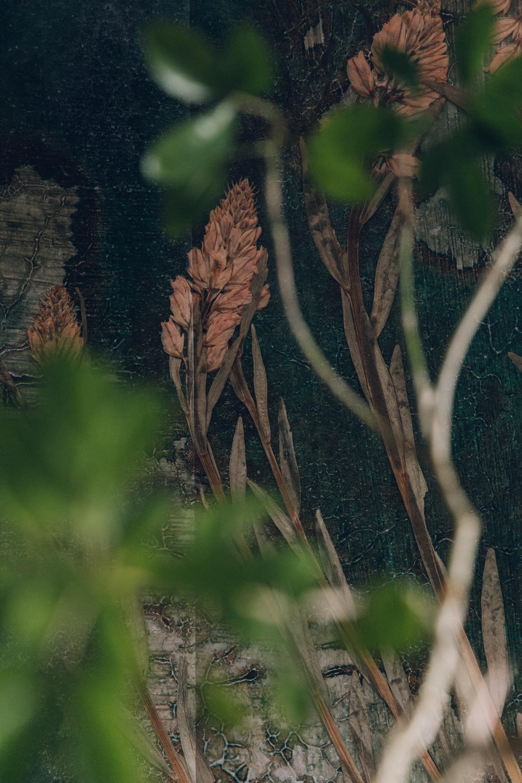 Photowall- Flora Hysterica x Haarkon LR-60.jpg
