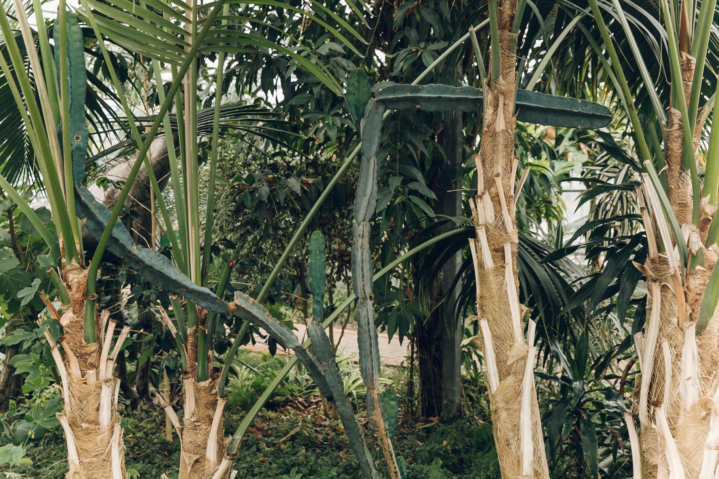 Woodthorpe Grange Tropical House, photographed by Haarkon