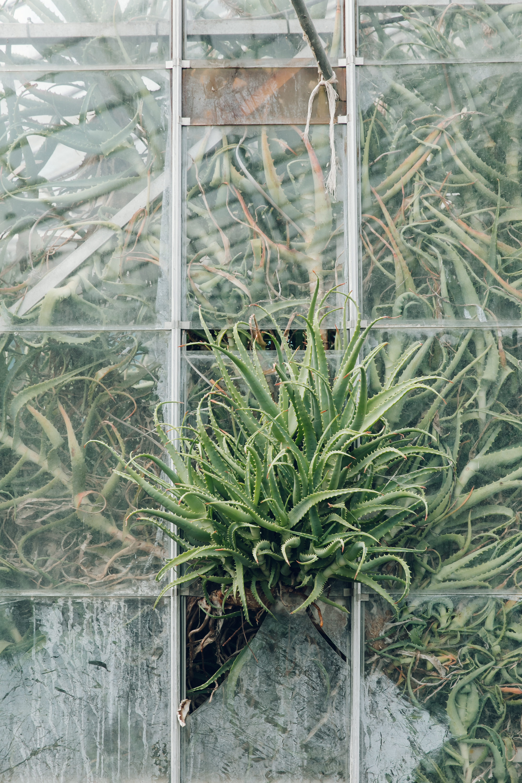 Wythenshawe Park Greenhouses, photographed by Haarkon