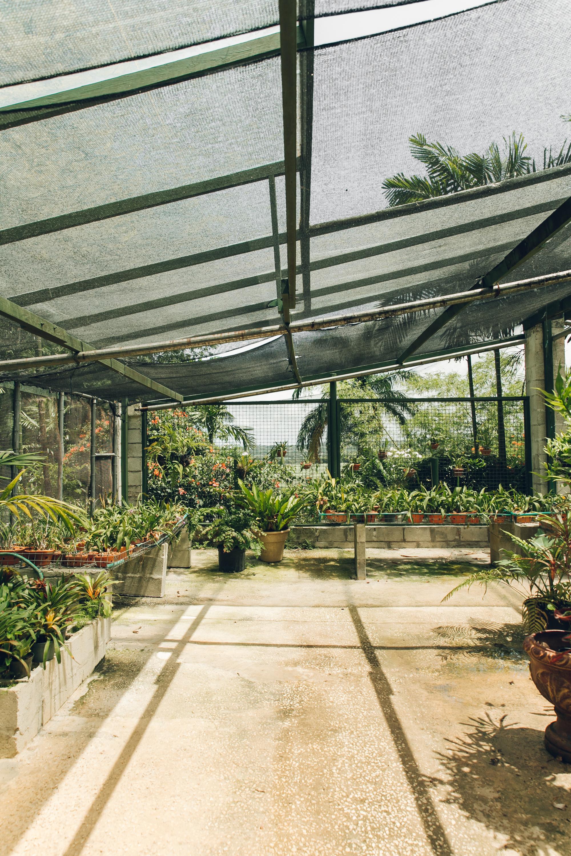 Orchid World in Barbados by Haarkon.