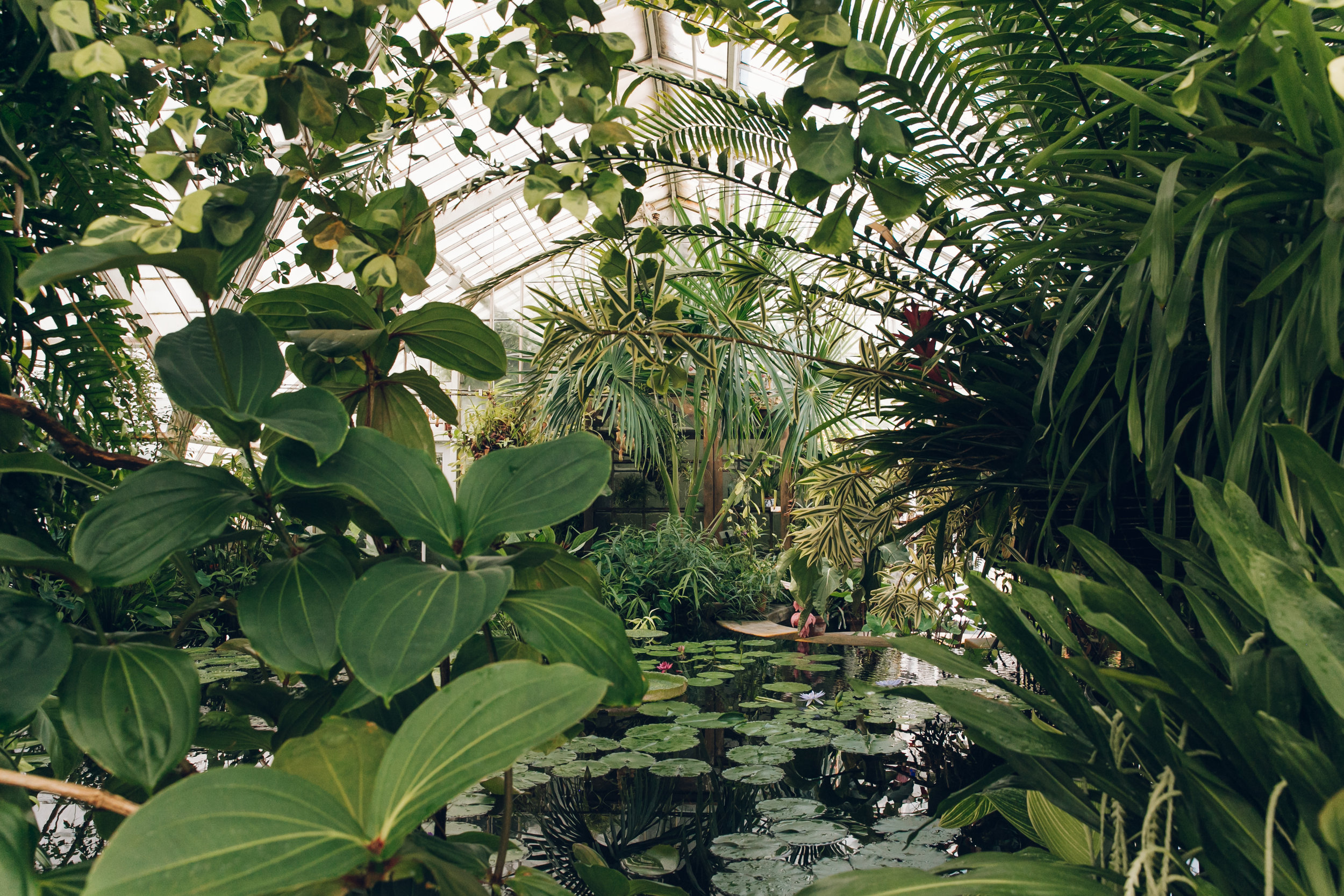 Conservatory of Flowers in San Francisco by Haarkon.