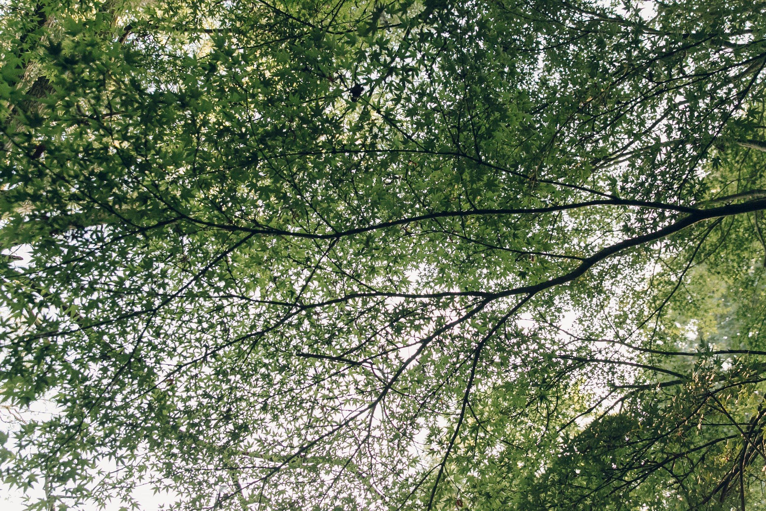 Belmond Le Manoir Japanese Garden Course by Haarkon
