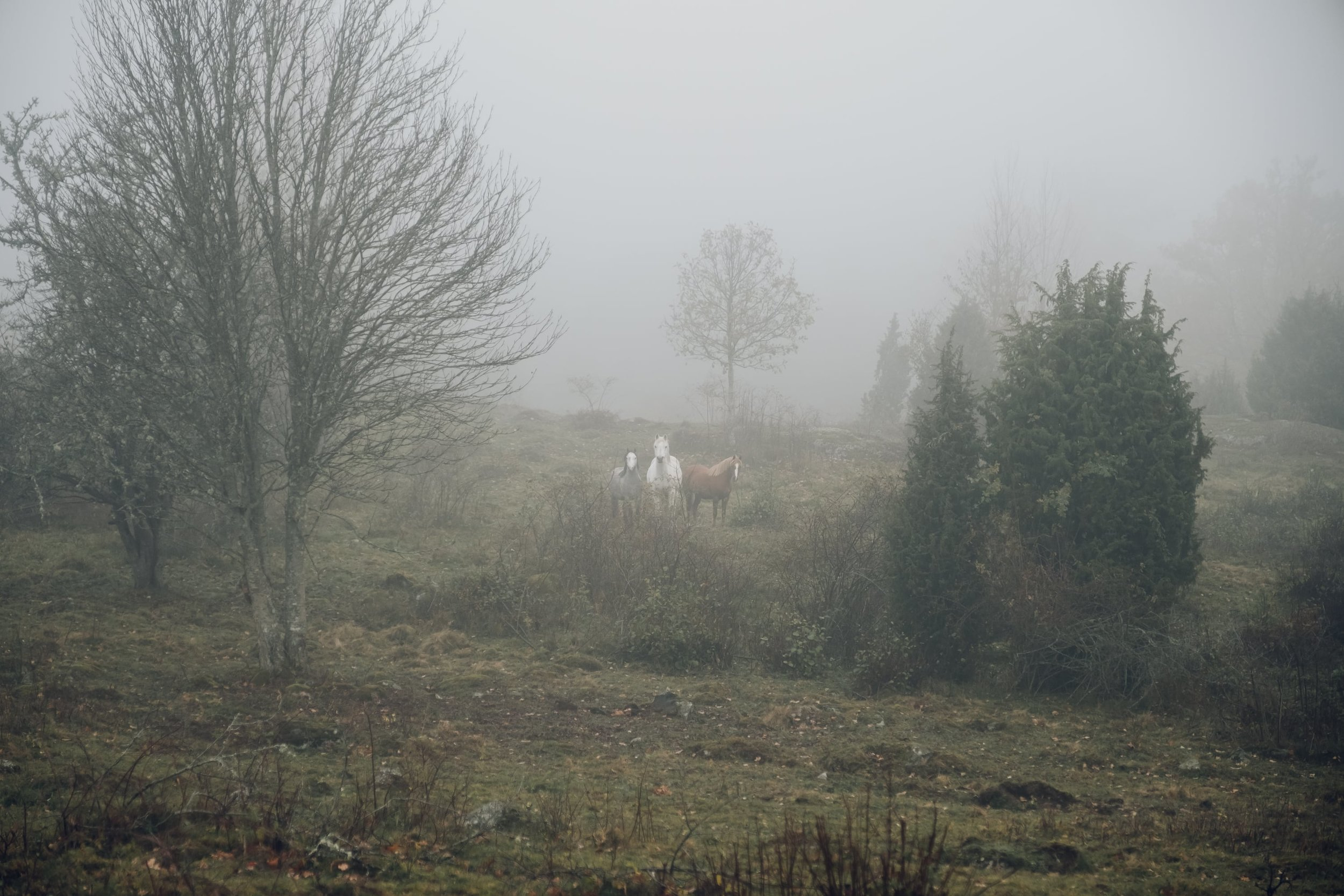 Wallby Sateri in Vetlanda, Sweden by Haarkon