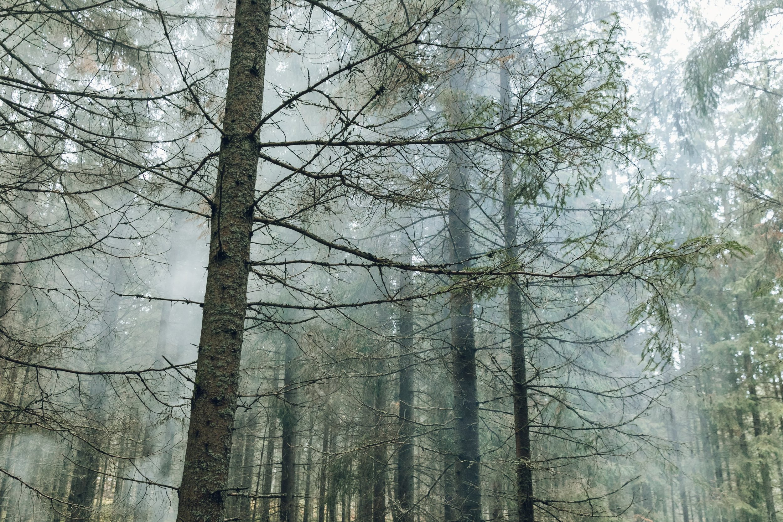 Forest in Sweden, photographed by Haarkon
