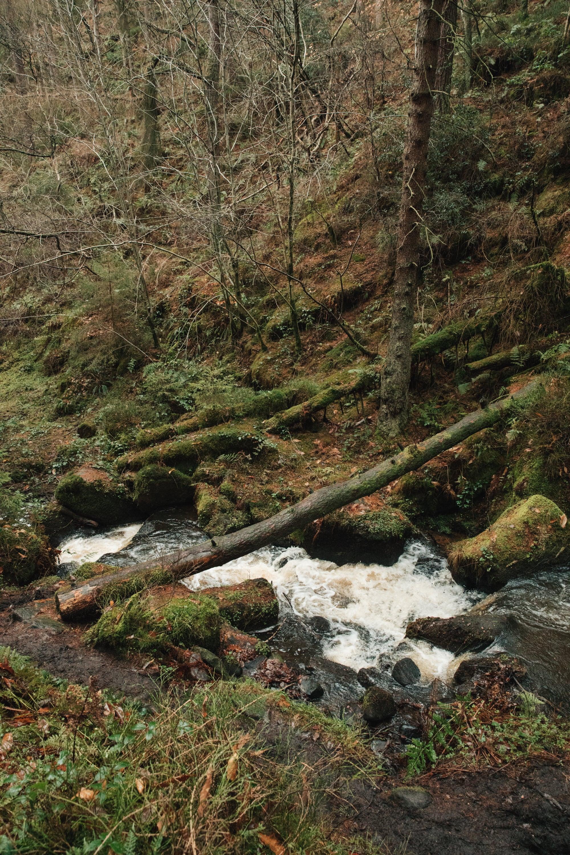 Wyming Brook Circular Walk in Sheffield by Haarkon