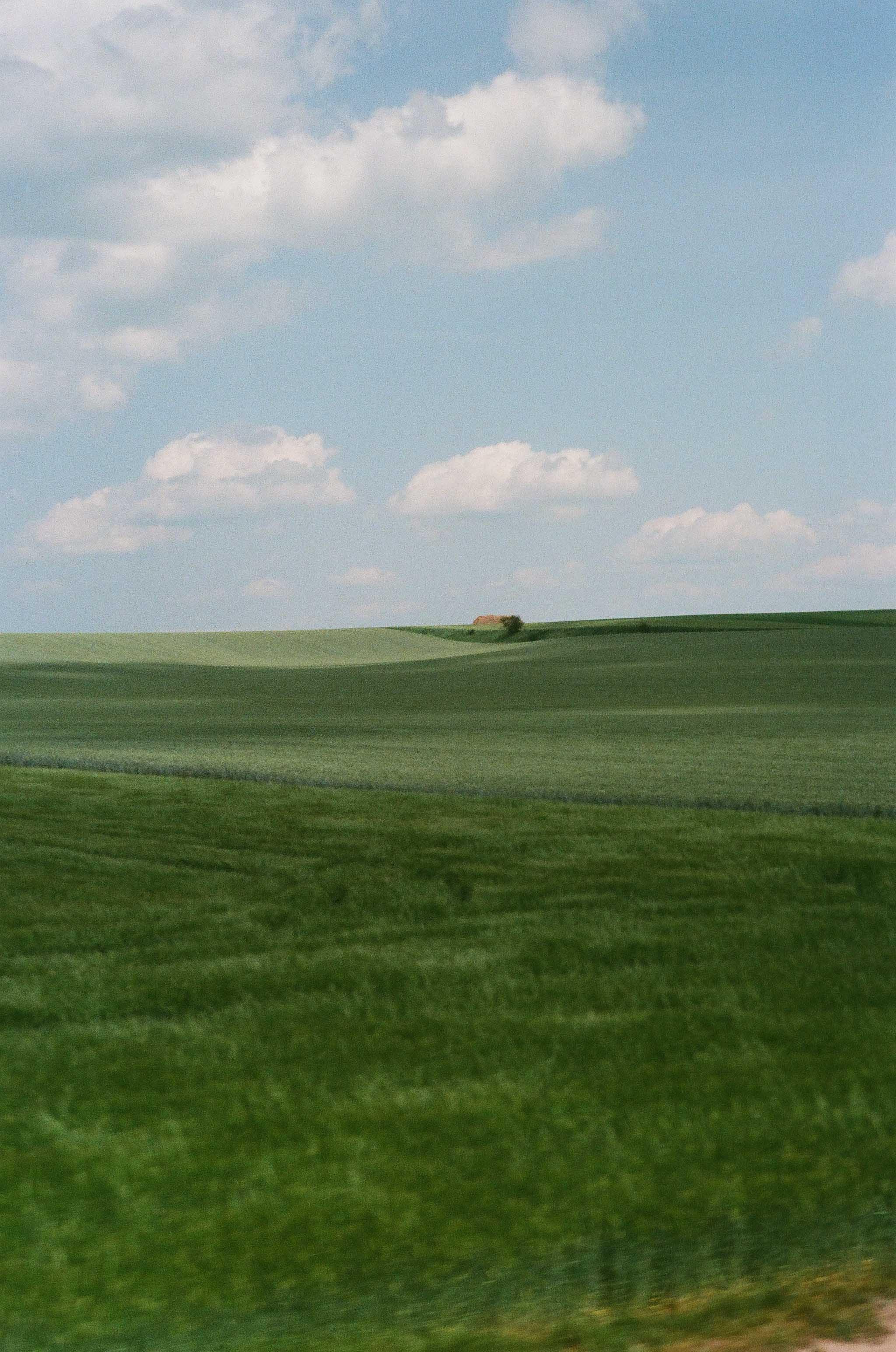 cz grass.jpg